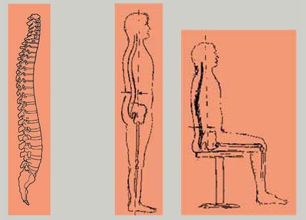 Die Wirbelsäule und der sich verändernde Körperschwerpunkt
